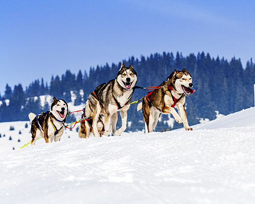 Sledding across the heart of Lapland children's charity challenge